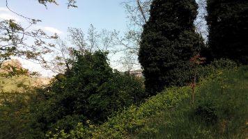 la Rocca tra gli alberi